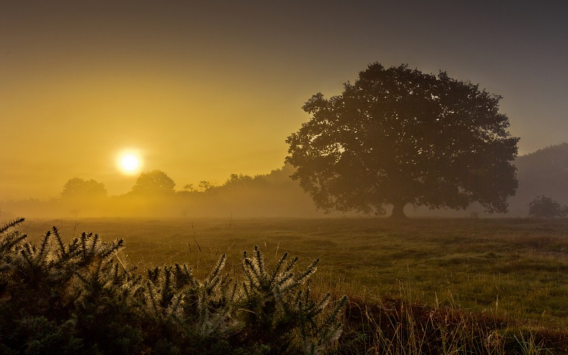 landscapes-fields-grass-trees-dawn-morning-sunrise-sunset-fog-mist-sky-gold-images-227880